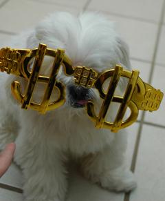 Moneycow_2